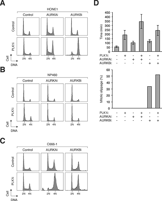 Co-inhibition of PLK1 and Aurora kinases specifically sensitizes NPC cells.