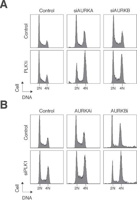 Small-molecule inhibitors and siRNAs of PLK1 and Aurora kinases act synergistically.