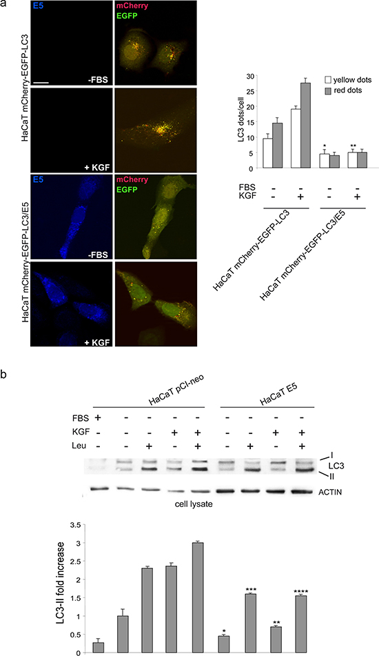 16E5 inhibits autophagosome assembly.
