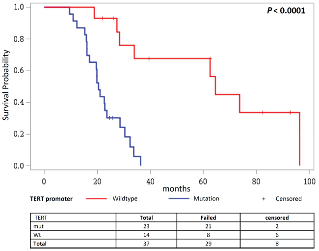 Overall survival in patients receiving TMZ and radiotherapy combined with a third adjuvant stratified according to the TERT promoter status.