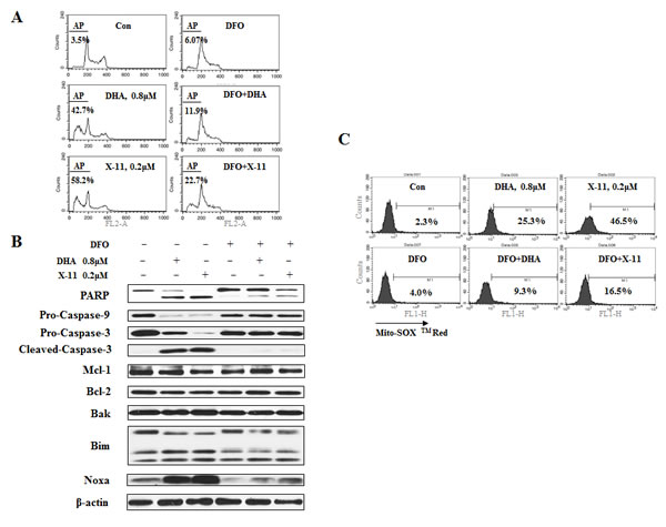 Iron is required for DHA and X-11-induce apoptosis and O