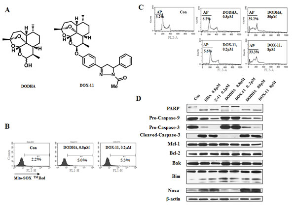 At low concentrations of DHA/X-11, an endoperoxide bridge is required for apoptosis induction.