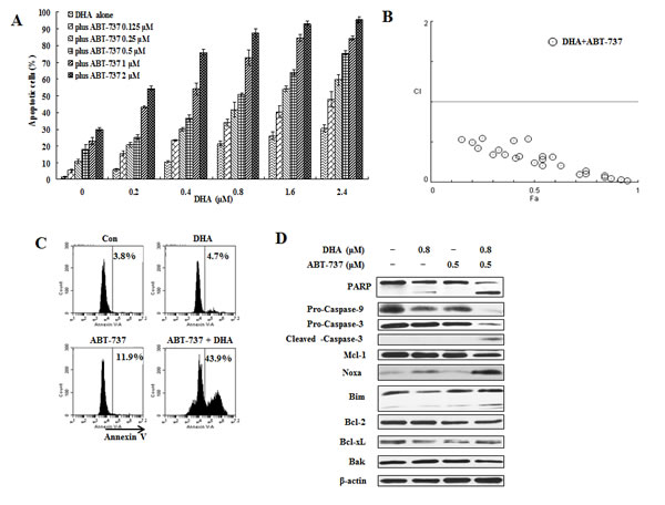 ABT-737 combined with DHA synergistically induce apoptosis in U937 cells.