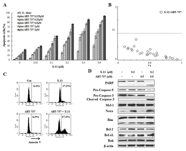 ABT-737 combined with X-11 synergistically induce apoptosis in U937 cells.
