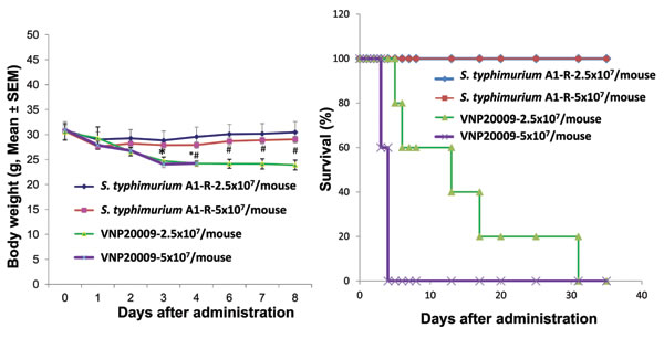 Comparison of body weight and survival of nude mice without tumors after