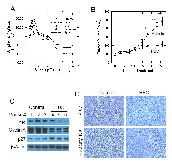 Effect of HBC on tumors derived from castration-resistant C4-2B cells in nude mice.