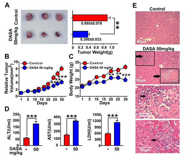 Hepatotoxicity is highly accompanied with the anticancer activity of dasatinib.