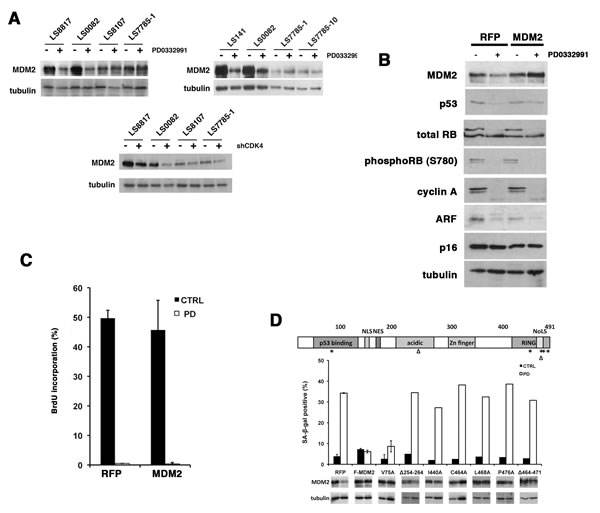 Enforcing MDM2 expression prevents senescence in WD/DDLS cells treated with PD0332991.