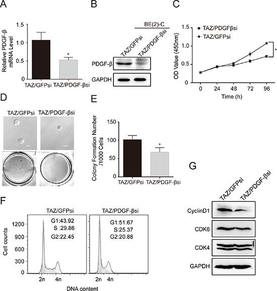 PDGF-β is a major downstream transcriptional target of TAZ.