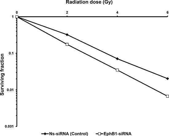 Knockdown of EphB1 receptor sensitizes fibroblasts to ionizing radiation.
