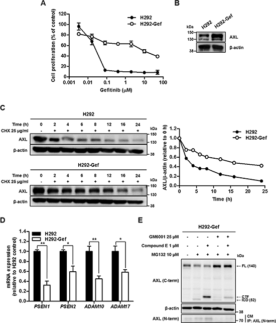 Down-regulated Turnover of AXL in Gefitinib Resistant H292 (H292-Gef) Cell Line.