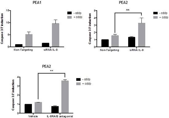 A. The effect of siRNA for IL-8 on platinum sensitivity.