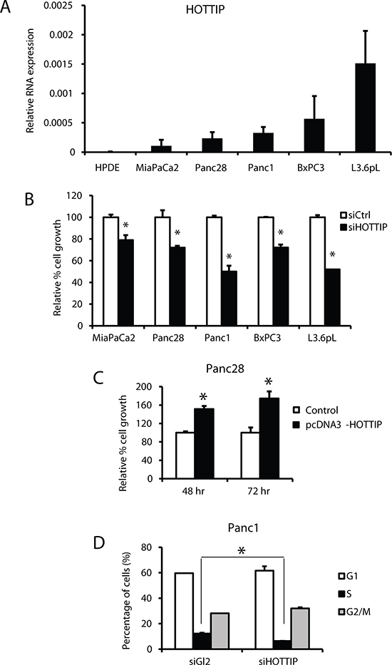 Effects of HOTTIP in pancreatic cell proliferation and cell cycle.