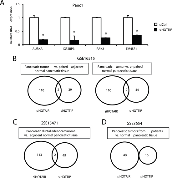 Inverse correlation of genes decreased by siHOTTIP and siHOTAIR and increased in pancreatic tumors.