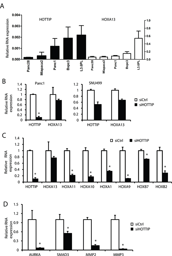 Coregulation of HOTTIP and HOX genes in pancreatic cancer cell lines.
