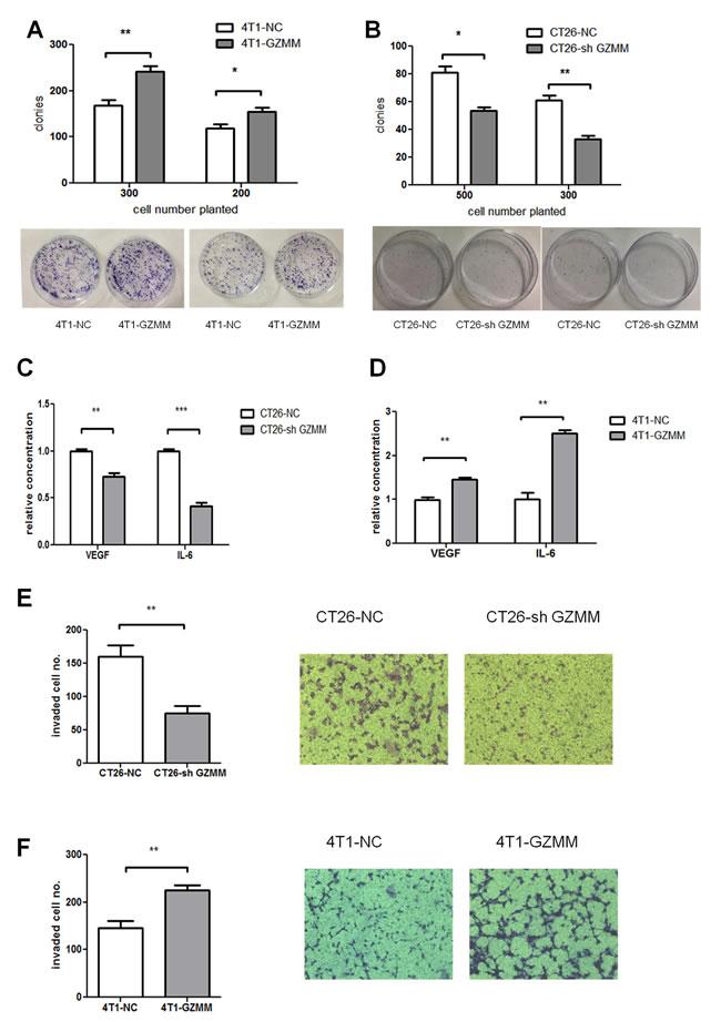 GZMM promotes cloning forming capacity, invasiveness and cytokine secretion