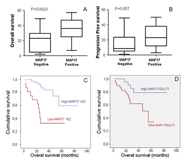 MAP17 alone or in combination with SGLT1 are good independent markers for patient survival.