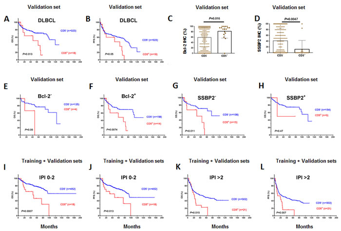 Biological and prognostic impact of CD5 expression in the validation DLBCL cohort.