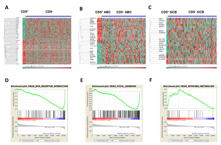Gene expression profiling and gene set enrichment analysis of CD5