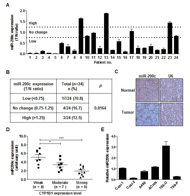 Inverse correlation between endogenous miR-200c level and CYP1B1 protein expression.