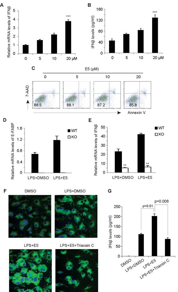 EI-05 treatment promotes IFNβ production in macrophages.
