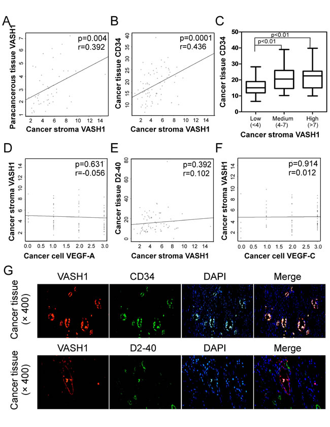 Correlations between cancer stroma VASH1 expression and levels of other angiogenic and lymphoangiogenenic molecules in colon cancer tissues.