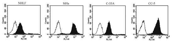 CD46 expression on the human cervical cancer (CC) cell lines SiHa and C-33A, primary human CC cells of CC-5, and normal human lung fibroblast cell line NHLF.