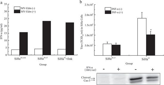 Regulation of MV-Edm induced INF-α release and virus production by caspase 3.