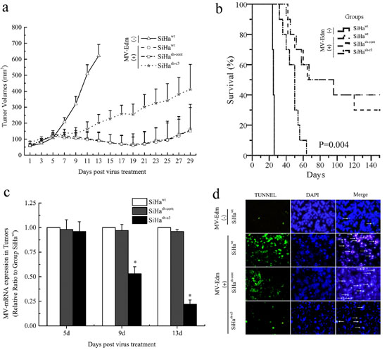 Deficiency in caspase 3 correlated with tumor response to oncolytic therapy in mice.