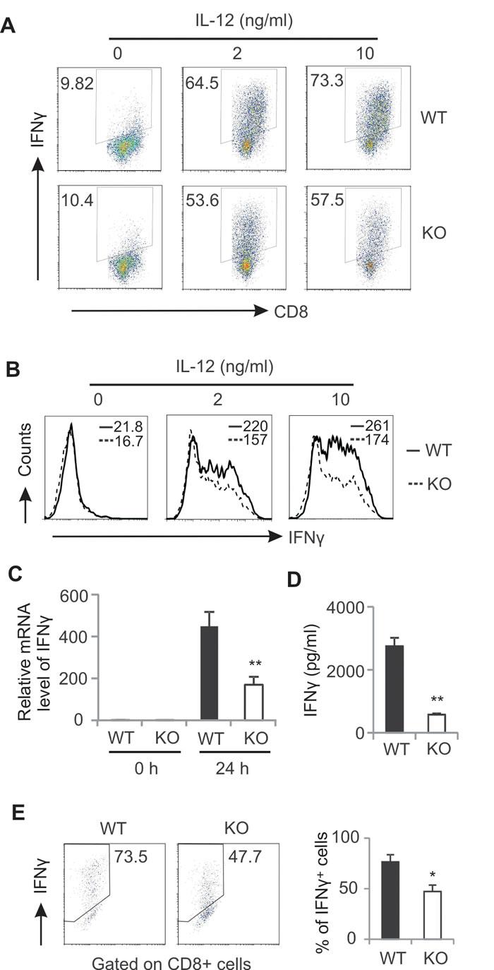 AMPK deficiency impairs CD8