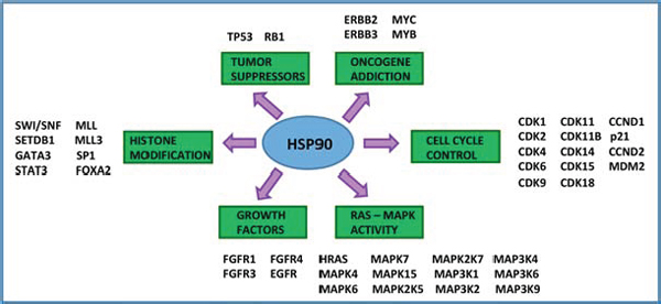 Hsp90 is a central hub to bladder cancer signaling.