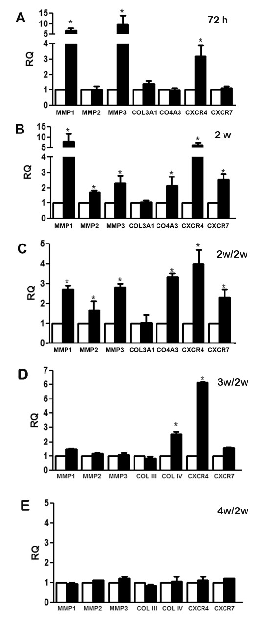 Changes in gene expression modulated by CSC-EV stimulation.