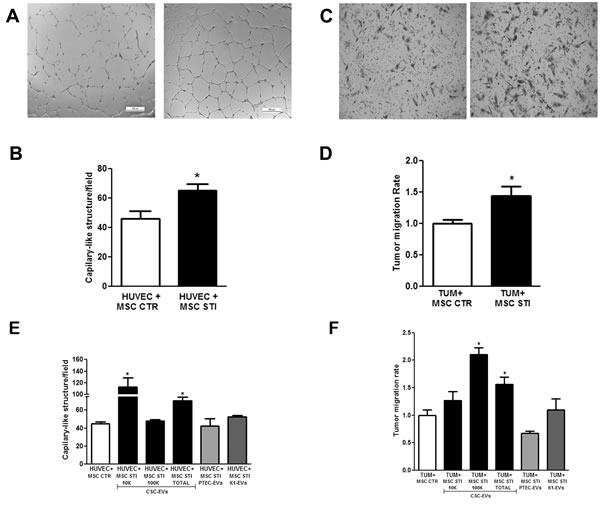 Effect of CSC-EV stimulation of MSCs on their ability to promote tumor migration and angiogenesis.
