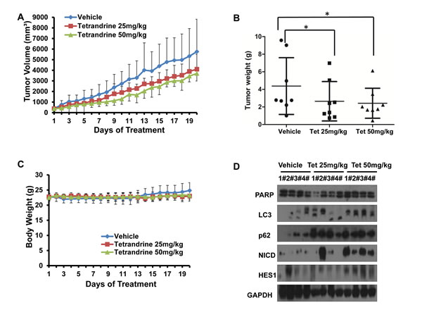Fig.1: Tetrandrine induces NB4 cell autophagy and differentiation and represses tumor growth