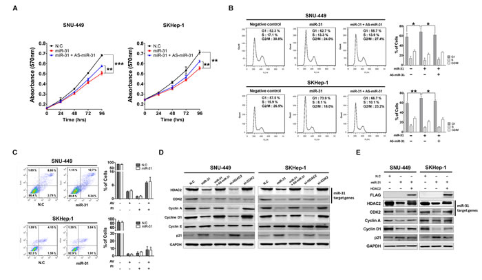 MiR-31 inhibits liver cancer cell growth by targeting G1/S transition regulatory molecules.