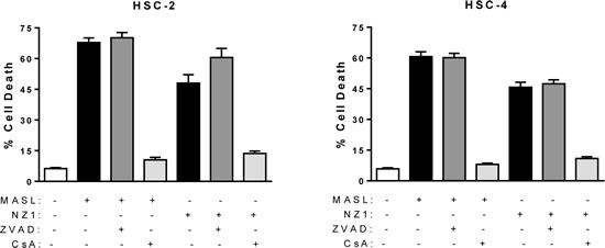 Mitochondrial membrane permeability transition inhibition protects cells from NZ-1 and MASL toxicity, while caspase inhibition does not.