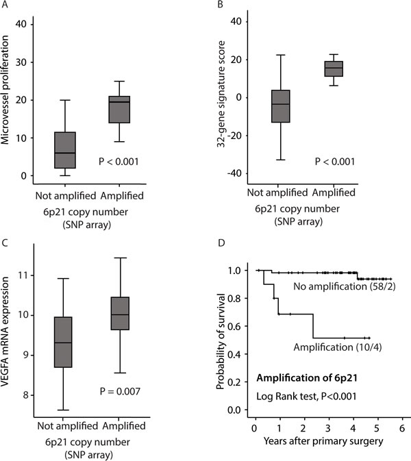 Relation between 6p21 amplification and: A: microvessel proliferation (MVP); B: the 32-gene signature score; C: VEGF mRNA expression, and D: disease specific survival according to the Kaplan-Meier method.