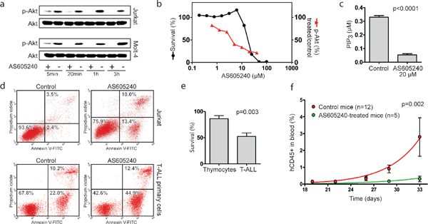 AS605240 inhibited p-Akt and PIP3 accumulation in T-ALL and showed anti-leukemic activity both in vitro and in vivo.