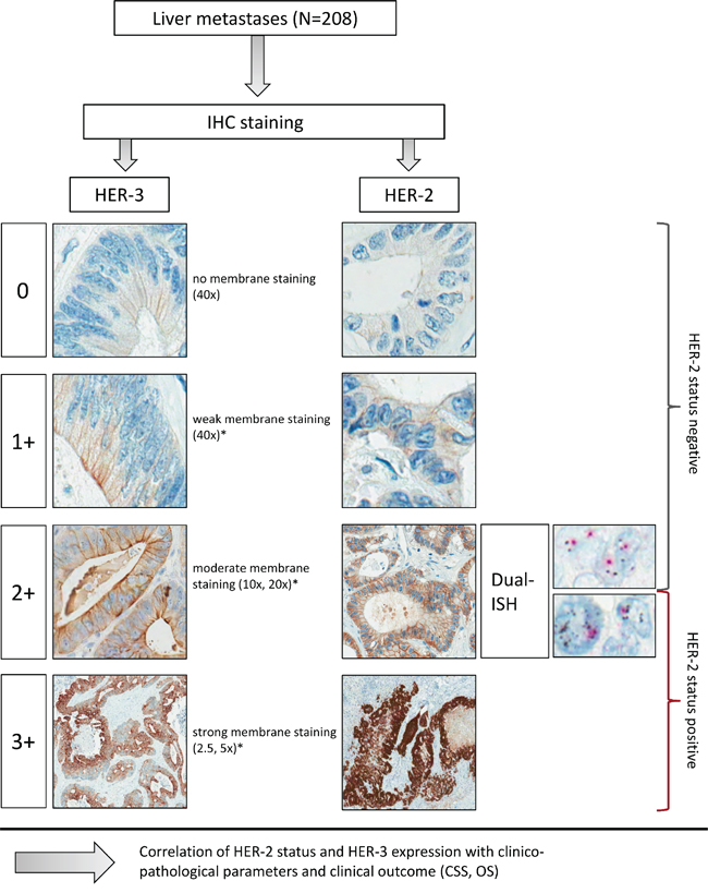 Examples of HER-2 and HER-3 immunohistochemical staining and Dual-ISH according to the HER-2 algorithm.