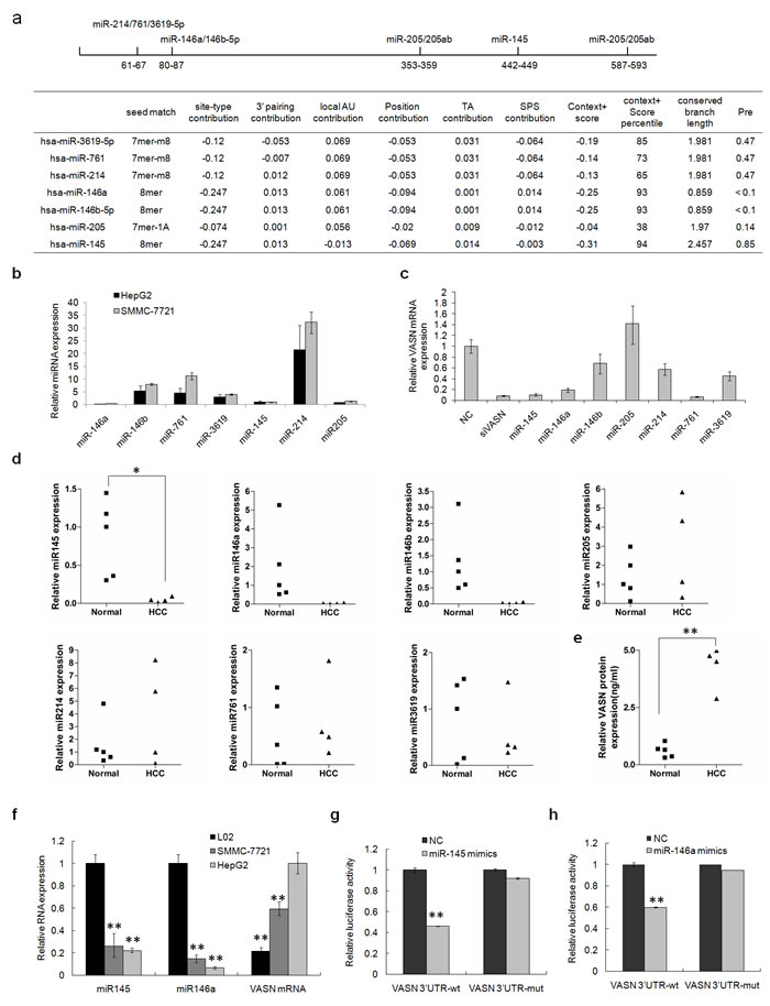 Low levels of miR145 and miR146a in hepatoma cells and HCC patient sera have a negative correlation with the level of VASN in those cells and sera.