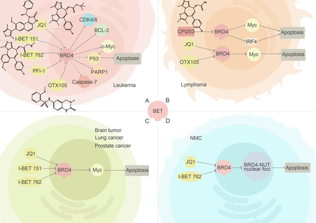 BRD2/4 inhibitors and their relevant anti-cancer pathways.