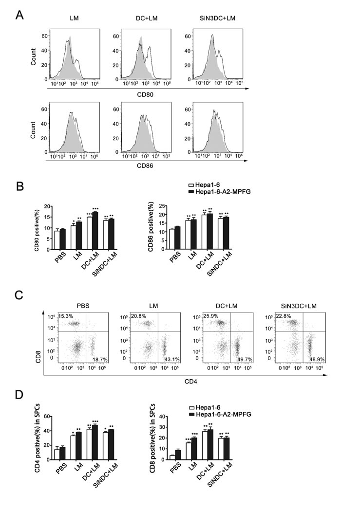 Fig. 5: Combined DC and LM treatment increases immune system effects in spleen.