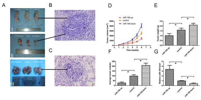 MiR-195 inhibits tumor growth and metastasis of osteosarcoma