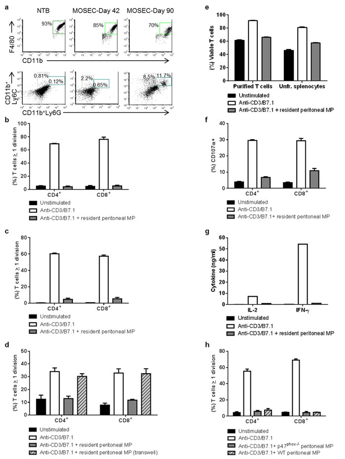 Peritoneal macrophages from non-tumor-bearing and MOSEC-ID8-bearing mice suppress T cell proliferation and activation.