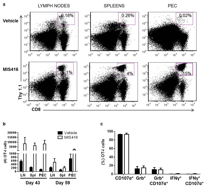 Vaccination with MIS416 increases accumulation of OT-I cells in the tumor microenvironment and systemically in ovarian tumor-bearing mice.
