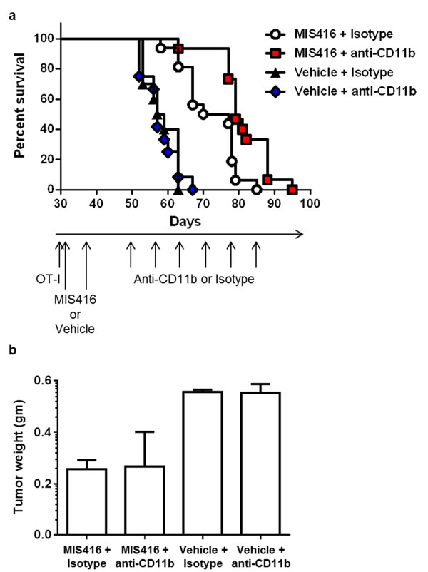 Myeloid cell depletion enhances the efficacy of MIS416 immunization in ovarian tumor-bearing mice.