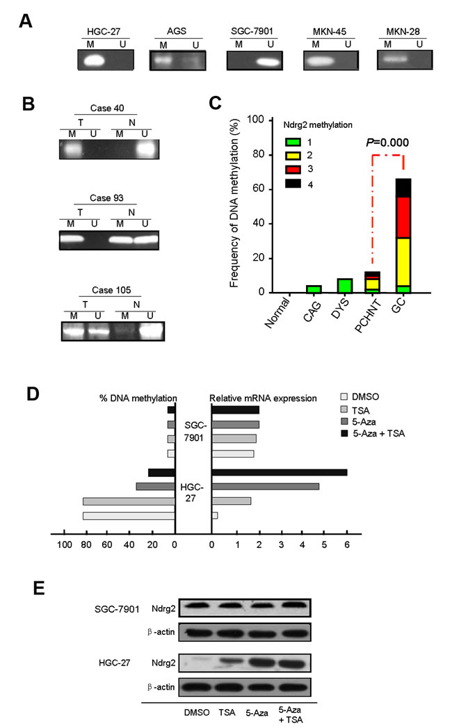 The analysis of aberrant DNA hypermethylation at the CpG sites in the Ndrg2 promoter.
