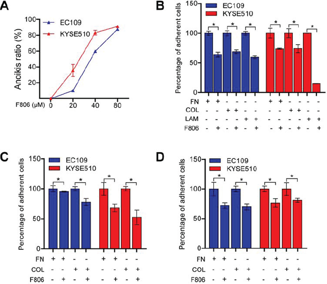 F806 inhibits cell adhesions and induces anoikis in ESCC cells.