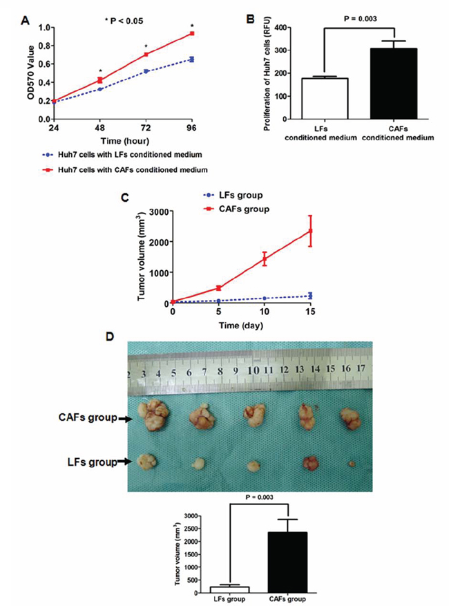 CAF-conditioned medium promoted the growth of HCC cells in vitro and in vivo.