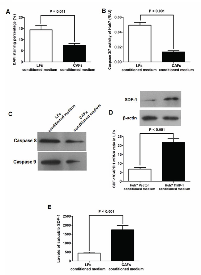 CAFs inhibited Huh7 apoptosis via activating SDF-1/CXCR4 pathway.